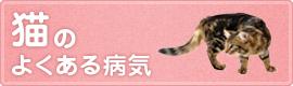 猫の よくある病気